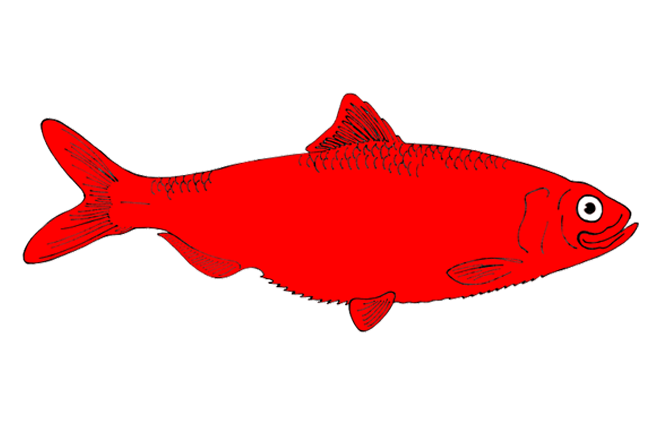 Red Catfish Clipart